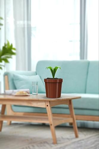 3December2020_15_plants.158